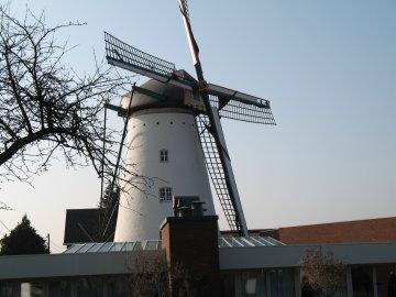 Foto van De Stormvogel<br />Al Mulino, Boorsem (Maasmechelen), Foto: Jos Hubin, 23.03.2012   Database Belgische molens